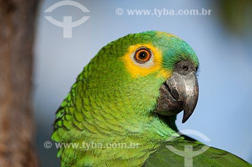 Assunto: Papagaio-verdadeiro (Amazona aestiva) na Chapada dos Veadeiros / Local: Goiás (GO) - Brasil / Data: 08/2007