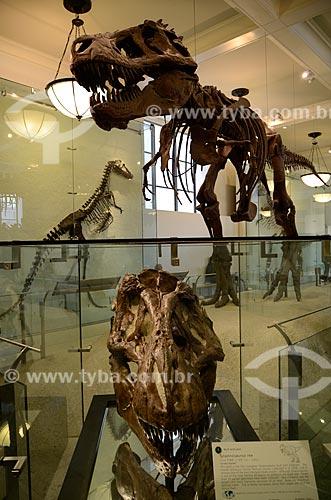 Assunto: Fóssil de um Tiranossauro Rex (Tyranosaurus rex) no Museu Americano de História Natural - Tiranossauro Rex significa