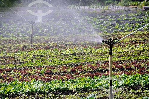 Assunto: Irrigação em plantação de hortaliças / Local: Distrito de Itaipava - Petrópolis - Rio de Janeiro (RJ) - Brasil / Data: 05/2012