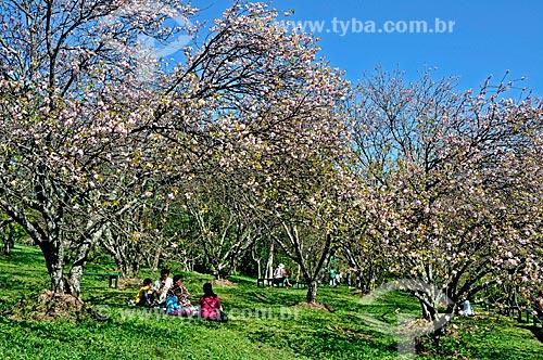 Assunto: Bosque de Cerejeiras no Parque do Carmo / Local: Itaquera - São Paulo (SP) -  Brasil / Data: 2009