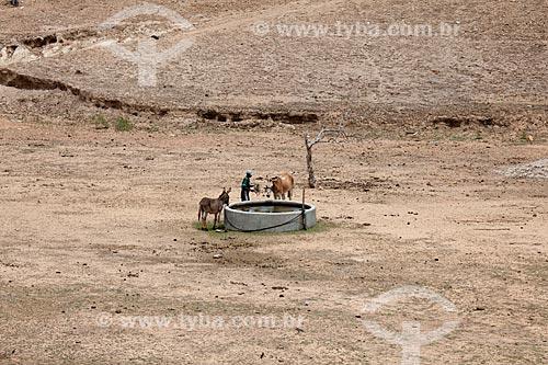 Assunto: Animais bebendo água em reservatório de água no período da seca no Sítio Pesqueira Velha / Local: Próximo à Arcoverde - Pernambuco (PE) - Brasil / Data: 01/2013
