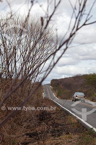 Assunto: Vegetação seca às margens da Rodovia PE-320 / Local: Pernambuco (PE) - Brasil / Data: 01/2013
