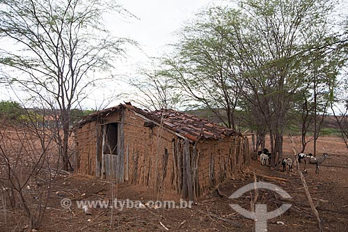 Assunto: Casa de pau-a-pique no Sertão do Pajeú / Local: São José do Egito - Pernambuco (PE) - Brasil / Data: 01/2013