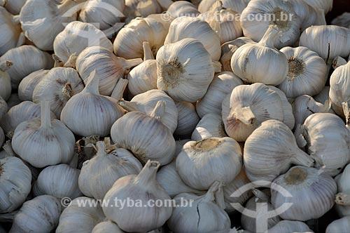 Assunto: Cabeças de alho (Allium sativum) / Local: Ponta Porã - Mato Grosso do Sul (MS) - Brasil / Data: 11/2012