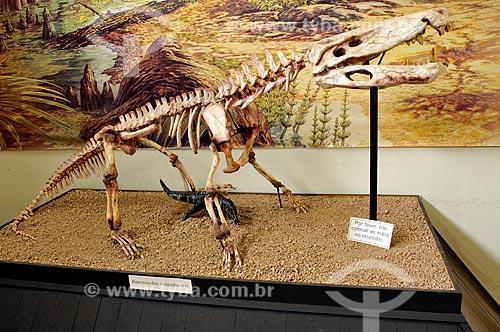 Fóssil original de um Baurusuchus salgadoensis - paleocrocodilo do período Cretáceo, extinto há aproximadamente noventa milhões de anos - no Museu de Paleontologia de Monte Alto   - Monte Alto - São Paulo - Brasil