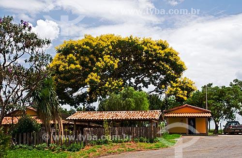 Assunto: Flamboyant (Delonix regia) - também conhecida como Flamboiã - às margens da BR-262 - trecho entre Araxá e Campos Altos / Local: Próximo à Araxa - Minas Gerais (MG) - Brasil / Data: 01/2012