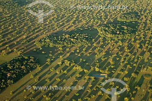 Assunto: Vista aérea da vegetação na região da Fazenda Barranco Alto no Pantanal Sul / Local: Aquidauana - Mato Grosso do Sul (MS) - Brasil / Data: 05/2010