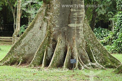 Assunto: Faveira-pé-de-arara (Parkia multijuga) no Jardim Botânico do Rio de Janeiro / Local: Jardim Botânico - Rio de Janeiro (RJ) - Brasil / Data: 01/2013