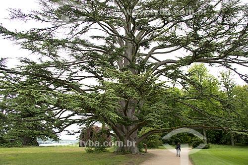 Assunto: Cedro no jardim do Château de Chaumont-sur-Loire (Castelo de Chaumont-sur-Loire) / Local: Blois - França - Europa / Data: 06/2012