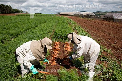 Assunto: Trabalhadores rurais colhendo de cenouras em Estação de Pesquisa e Melhoramento Genético / Local: Carandaí - Minas Gerais (MG) - Brasil / Data: 03/2012