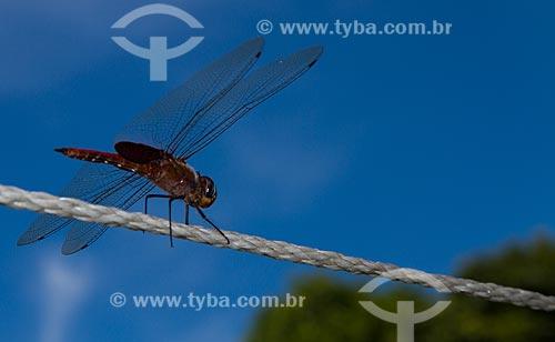Assunto: Libélula pousada em uma corda / Local: Seropédica - Rio de Janeiro (RJ) - Brasil / Data: 02/2013