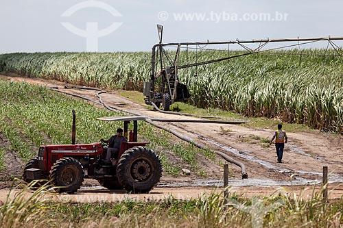 Assunto: Plantação de Cana de Açúcar as margens da Rodovia BR-101 no KM 14 / Local: Pernambuco (PE) - Brasil / Data: 02/2013