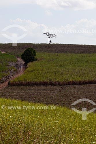 Assunto: Plantação de cana-de-açúcar as margens da Rodovia PE-075 / Local: Goiana - Pernambuco (PE) - Brasil / Data: 02/2013