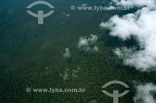 Assunto: Parque Nacional do Pico da Neblina / Local: Amazonas (AM) - Brasil / Data: 10/2012