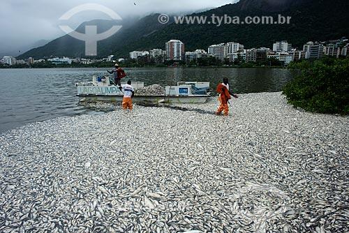 Assunto: Funcionários da Comlurb retirando peixes mortos da Lagoa Rodrigo de Freitas / Local: Rio de Janeiro (RJ) - Brasil / Data: 03/2013