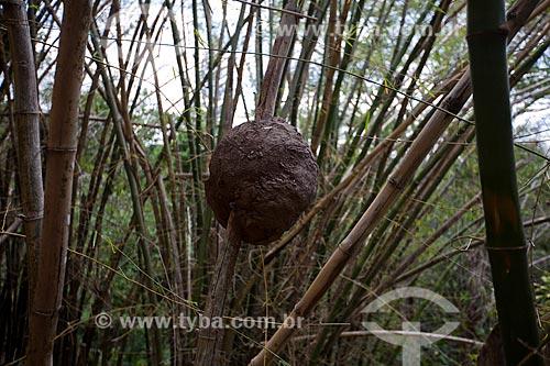 Assunto: Cupinzeiro em um bambuzal / Local: Areia - Paraíba (PB) - Brasil / Data: 02/2013