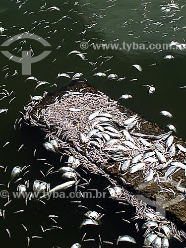 Assunto: Mortandade de peixes na Lagoa Rodrigo de Freitas / Local: Lagoa - Rio de Janeiro (RJ) - Brasil / Data: 03/2013