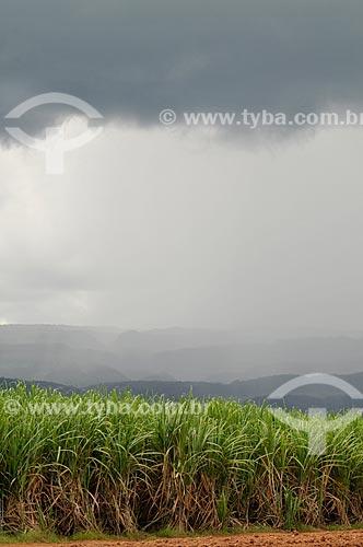 Assunto: Plantação de Cana-de-Açúçar para produção de álcool / Local: Delfinópolis - Minas Gerais (MG) - Brasil / Data: 03/2013