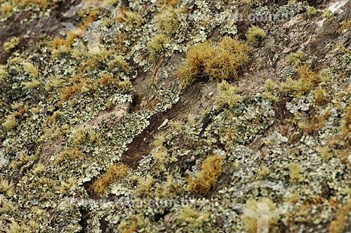 Assunto: Musgos e lìquens em uma pedra no Vale dos Canteiros na Serra da Canastra / Local: São João Batista do Glória - Minas Gerais (MG) - Brasil / Data: 03/2013