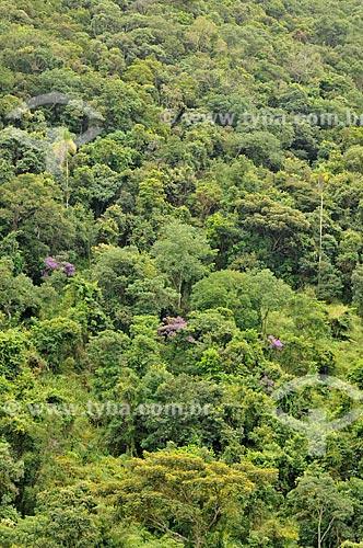 Assunto: Mata nativa na Serra da Canastra / Local: Vargem Bonita - Minas Gerais (MG) - Brasil / Data: 03/2013