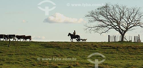 Assunto: Vaqueiro tocando o rebanho / Local: Distrito de Música - Dom Pedrito - Rio Grande do Sul (RS) - Brasil / Data: 2012