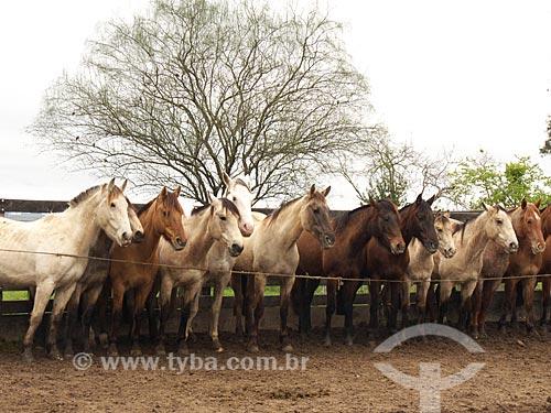 Assunto: Cavalos em forma Estância da Bica / Local: Distrito de Música - Dom Pedrito - Rio Grande do Sul (RS) - Brasil / Data: 2012