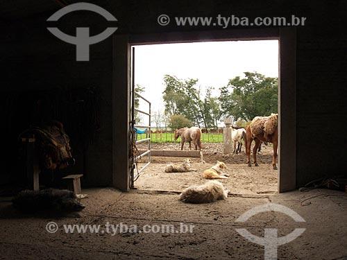 Assunto: Galpão com cavalos e cachorros na Estância da Bica / Local: Distrito de Música - Dom Pedrito - Rio Grande do Sul (RS) - Brasil / Data: 2012