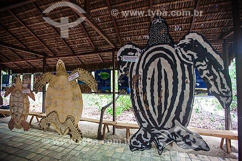 Protótipos com finalidade didática das espécies (da esq para a direita) Tartaruga-de-couro, Tartaruga-verde, Tartaruga-cabeçuda, Tartaruga-de-Pente e Tartaruga-oliva no Museu do Santuário Ecológico de Pipa  - Tibau do Sul - Rio Grande do Norte - Brasil