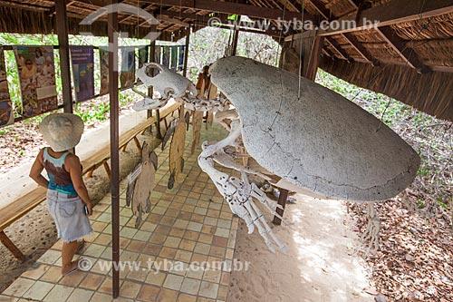 Assunto: Esqueleto de uma Tartaruga-verde (Chelonia mydas) macho adulto no Museu do Santuário Ecológico de Pipa - montagem do biólogo Armando Barsante / Local: Tibau do Sul - Rio Grande do Norte (RN) - Brasil / Data: 03/2013