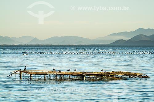 Assunto: Armadilha para cultivo de ostras na Praia do Ribeirão da Ilha / Local: Ribeirão da Ilha - Florianópolis - Santa Catarina (SC) - Brasil / Data: 05/2013