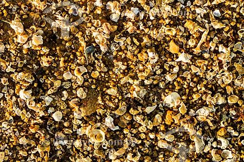 Assunto: Detalhe da areia da Praia do Ribeirão da Ilha / Local: Ribeirão da Ilha - Florianópolis - Santa Catarina (SC) - Brasil / Data: 05/2013