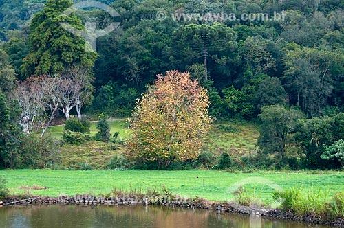 Assunto: Vegetação na Serra Gaúcha / Local: Rio Grande do Sul (RS) - Brasil / Data: 05/2013