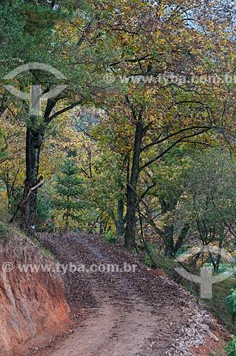 Assunto: Estrada de terra na Serra Gaúcha / Local: Rio Grande do Sul (RS) - Brasil / Data: 05/2013
