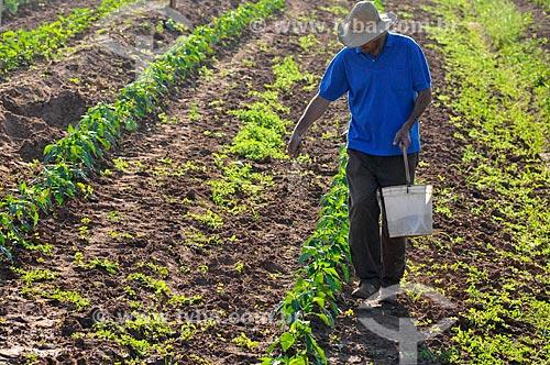 Assunto: Adubação manual na plantação de pimentão / Local: São José do Rio Preto - São Paulo (SP) - Brasil / Data: 05/2013