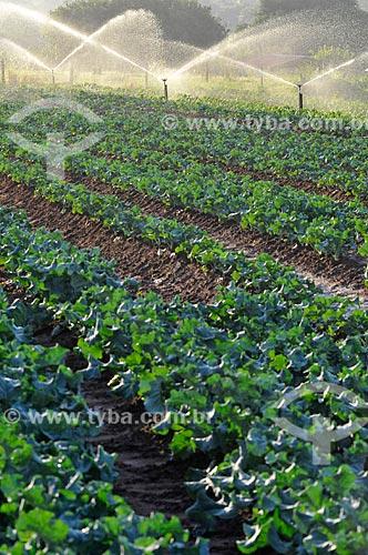 Assunto: Irrigação na plantação de brócolis / Local: São José do Rio Preto - São Paulo (SP) - Brasil / Data: 05/2013