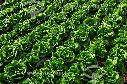 Assunto: Plantação de Alface Salanova com a técnica hidropônica / Local: São José do Rio Preto - São Paulo (SP) - Brasil / Data: 05/2013