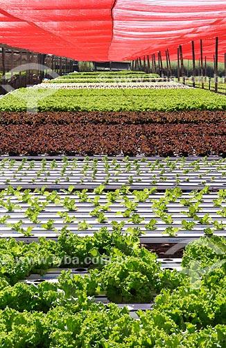 Assunto: Plantação de alface e alface roxa com a técnica hidropônica / Local: São José do Rio Preto - São Paulo (SP) - Brasil / Data: 05/2013