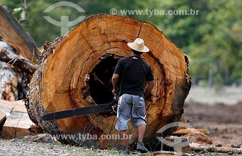 Assunto: Homem cortando castanheira / Local: Parintins - Amazonas (AM) - Brasil / Data: 07/2013