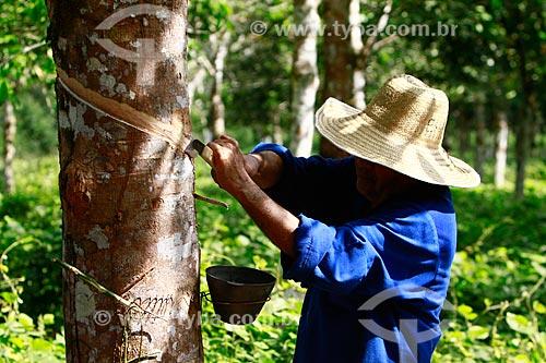 Técnico da EMBRAPA coletando látex de uma plantação experimental de seringueiras da Amazônia  - Itacoatiara - Amazonas (AM) - Brasil
