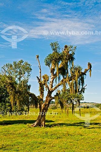 Assunto: Vista de pasto com árvore em destaque / Local: Distrito de Aldeia Velha - Silva Jardim - Rio de Janeiro (RJ) - Brasil / Data: 06/2013