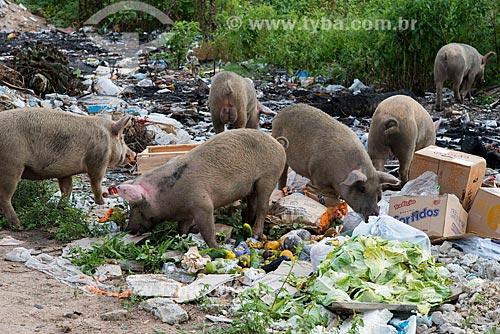 Assunto: Porcos em terreno baldio / Local: Caruaru - Pernambuco (PE) - Brasil / Data: 06/2013