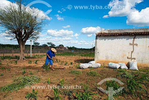 Assunto: Homem carpinando horta de subsistência de milho no vilarejo de Serrote da Cinza / Local: Custódia - Pernambuco (PE) - Brasil / Data: 06/2013