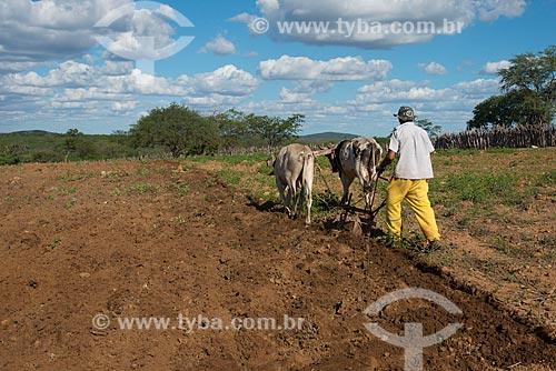 Assunto: Homem arando a terra no vilarejo de Serrote da Cinza / Local: Custódia - Pernambuco (PE) - Brasil / Data: 06/2013