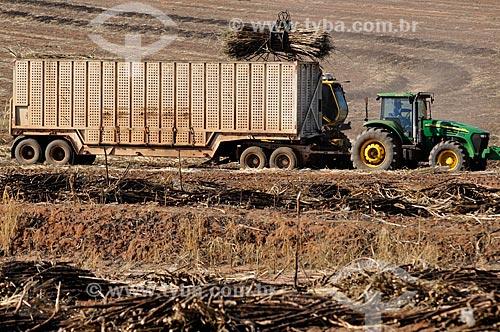 Assunto: Colheita mecanizada de Cana de Açúcar / Local: Ibirá - São Paulo (SP) - Brasil / Data: 08/2013