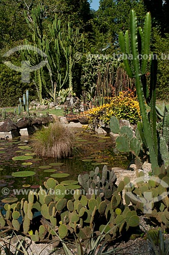 Assunto: Cactos no Jardim Botânico do Rio de Janeiro / Local: Jardim Botânico - Rio de Janeiro (RJ) - Brasil / Data: 07/2012
