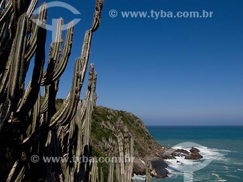 Assunto: Cactos próximo as formações rochosas na Praia da Ferradurinha / Local: Armação dos Búzios - Rio de Janeiro (RJ) - Brasil / Data: 08/2011