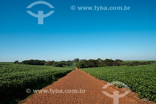 Assunto: Plantação de soja na zona rural de Cascavel / Local: Cascavel - Paraná (PR) - Brasil / Data: 01/2013