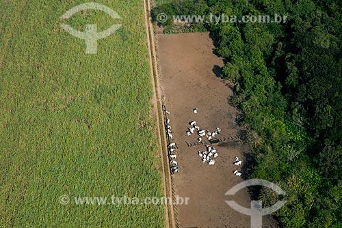 Assunto: Vista aérea de plantação de cana-de-açúcar e curral com gado nelore / Local: Pitangueiras - São Paulo (SP) - Brasil / Data: 05/2013