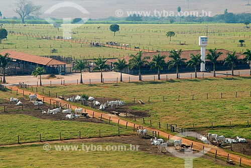 Assunto: Vista aérea do rebanho de gado da Estância São Pedro / Local: Barretos - São Paulo (SP) - Brasil / Data: 05/2013