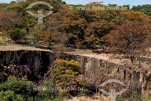 Assunto: Árvores com característica de mudança de outono para inverno no Parque Municipal Prefeito Luiz Roberto Jábali - também conhecido como Parque Curupira / Local: Ribeirão Preto - São Paulo (SP) - Brasil / Data: 05/2013